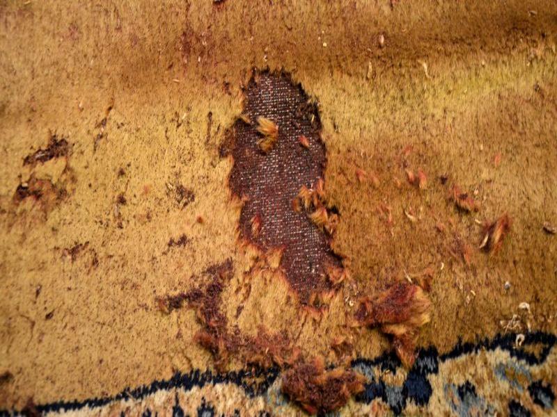 Extrem Motten im Teppich   Was tun ? Erste Hilfe   Teppichreinigung Vorwerk UQ65